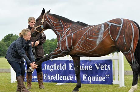Lingfield Equine Veterinary Practise and Sussex Polo Tournament